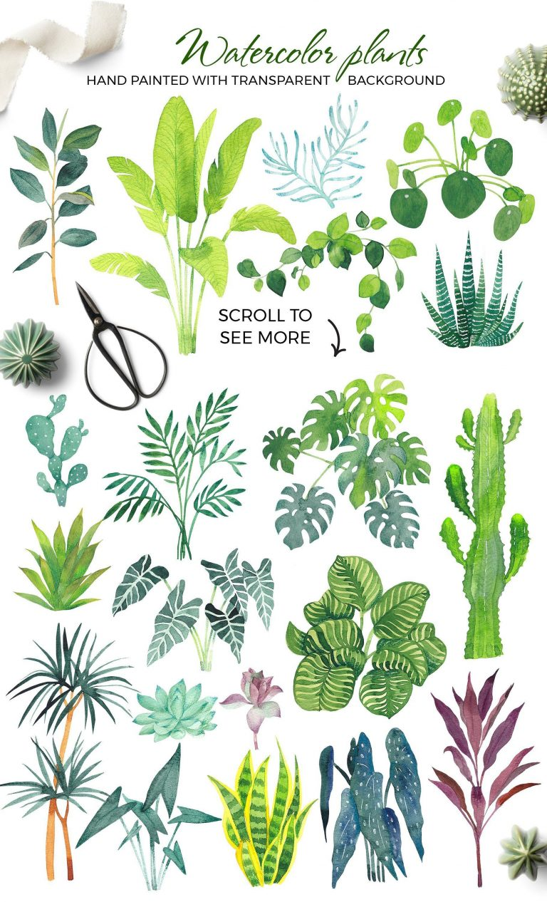 Scandi house plants inside the creator for the beauty of the drops in the Creative Market #posterd...