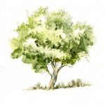 The watercolor is very good at drawing. Here is a small crabapple tree, made with...
